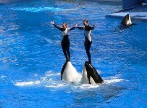 SeaWorld, forlystelsespark og akvarium 1
