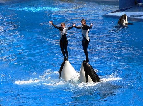 SeaWorld, forlystelsespark og akvarium